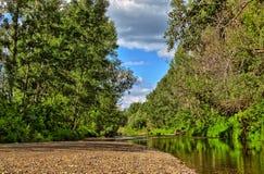 Ποταμός στο ξύλο Στοκ φωτογραφίες με δικαίωμα ελεύθερης χρήσης