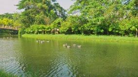 Ποταμός στο πάρκο και πράσινα δέντρα με τις παλαιές γέφυρες απόθεμα βίντεο