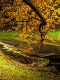 Ποταμός στο πάρκο Στοκ Εικόνες
