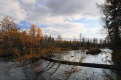 Ποταμός στο σιβηρικό taiga Στοκ Εικόνες