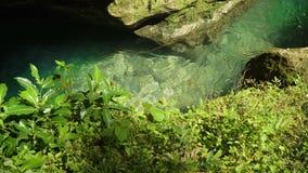 Ποταμός στο τροπικό δάσος απόθεμα βίντεο