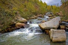 Ποταμός στο φυσικό δάσος Στοκ Εικόνα