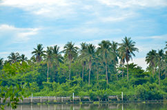 ποταμός Ταϊλάνδη samutsakorn επαρχία Στοκ Εικόνες