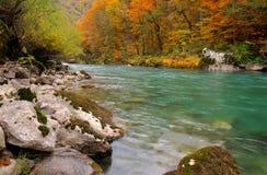 Ποταμός της Tara στο φαράγγι κοντά στο 5$α  urÄ ` eviÄ ‡ μια γέφυρα της Tara, Μαυροβούνιο - εικόνα φθινοπώρου Στοκ φωτογραφίες με δικαίωμα ελεύθερης χρήσης