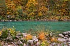 Ποταμός της Tara στο φαράγγι κοντά στο 5$α  urÄ ` eviÄ ‡ μια γέφυρα της Tara, Μαυροβούνιο - εικόνα φθινοπώρου Στοκ Εικόνες
