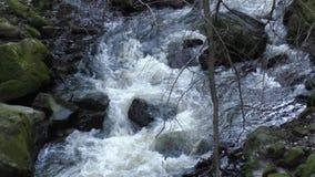Ποταμός τους βράχους που καλύπτονται με με το βρύο απόθεμα βίντεο