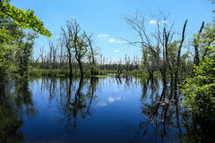 Ποταμός του Ίπσουιτς Στοκ φωτογραφίες με δικαίωμα ελεύθερης χρήσης