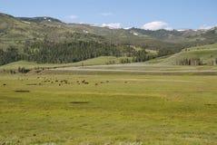 Ποταμός του Lamar κοιλάδων, εθνικό πάρκο Yellowstone, Ουαϊόμινγκ, ΗΠΑ Στοκ εικόνα με δικαίωμα ελεύθερης χρήσης