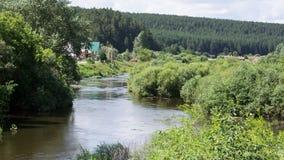 Ποταμός το καλοκαίρι Ρεύμα και άλγη απόθεμα βίντεο