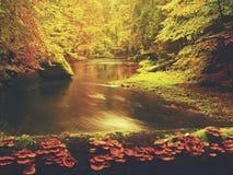 Ποταμός φθινοπώρου Ζωηρόχρωμη όχθη ποταμού φθινοπώρου στο γρήγορο ρεύμα, κάτω από τα χρυσά παλαιά δέντρα Στοκ εικόνα με δικαίωμα ελεύθερης χρήσης
