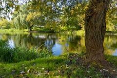 Ποταμός φθινοπώρου με τις αντανακλάσεις του κλάματος των ιτιών στοκ φωτογραφίες