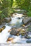 Ποταμός, φύση, νερό θαμπάδων, καταρράκτες, δέντρο, άδεια, pollino, Καλαβρία, Ιταλία Στοκ Εικόνες