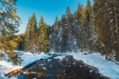 Ποταμός χειμερινών βουνών στο δάσος στα βουνά Tatra Στοκ Φωτογραφίες