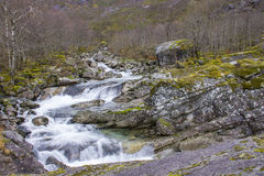 Ποταμός Στοκ Εικόνες