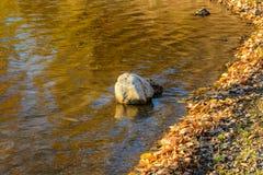Ποταμός Angara σε Listvyanka Στοκ φωτογραφίες με δικαίωμα ελεύθερης χρήσης