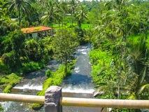 Ποταμός Ayung βουνών μεταξύ των αλσυλλίων ζουγκλών και μπαμπού σε Ubud, Μπαλί Στοκ Φωτογραφίες