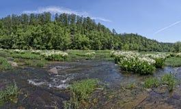 Ποταμός Cahaba με τους κρίνους Στοκ Φωτογραφίες