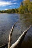 Ποταμός Chena Στοκ Φωτογραφίες