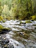 ποταμός dungeness Στοκ Εικόνες