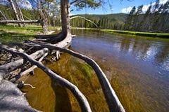 Ποταμός Gibbon Στοκ εικόνες με δικαίωμα ελεύθερης χρήσης