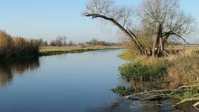 Ποταμός Havel κατά τη διάρκεια του χρόνου φθινοπώρου Τοπίο Havelland στη Γερμανία Δέντρο και κάλαμος ιτιών στην ακτή απόθεμα βίντεο