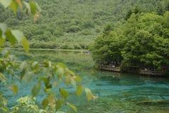 Ποταμός Jiuzhaigou peacock Στοκ Εικόνες