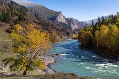 Ποταμός Katun στα βουνά Altai, Δημοκρατία Altai, Ρωσία Φύση Στοκ φωτογραφία με δικαίωμα ελεύθερης χρήσης