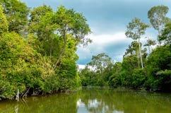 Ποταμός Kinabatangan, Μαλαισία, Μπόρνεο στοκ εικόνα