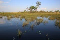 Ποταμός Kwando στοκ εικόνα