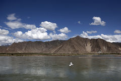 ποταμός lhasa πουλιών Στοκ εικόνες με δικαίωμα ελεύθερης χρήσης