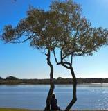 Ποταμός Maroochy, Maroochydore, ακτή ηλιοφάνειας, Queensland, Αυστραλία Στοκ Φωτογραφίες