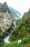 Ποταμός Marsyangdi μεταξύ Chyamche και Tal - του Νεπάλ Στοκ Φωτογραφίες