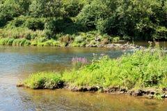 Ποταμός Semois, βελγικές Αρδέννες Στοκ Εικόνες