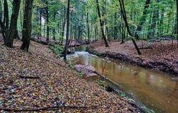 Ποταμός Skroda που διατρέχει των αποβαλλόμενων ξύλων Στοκ εικόνες με δικαίωμα ελεύθερης χρήσης