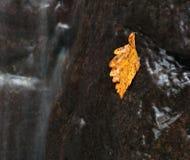 Ποταμός Vanchin. Φθινόπωρο. Κίτρινο φύλλο. Στοκ Φωτογραφία