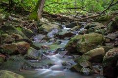 Ποταμός Woodline στοκ εικόνες με δικαίωμα ελεύθερης χρήσης