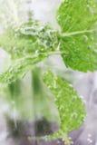 Ποτό Mojito closup του γυαλιού που παρουσιάζει τη μέντα και φυσαλίδες Στοκ Εικόνες