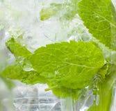 Ποτό Mojito closup του γυαλιού που παρουσιάζει τη μέντα και φυσαλίδες Στοκ Φωτογραφία
