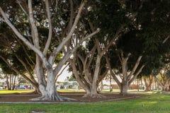 Πουέρτο Ρίκο, θλγραν θλθαναρηα στην Ισπανία - 14 Δεκεμβρίου 2017: Πάρκο με τα όμορφα δέντρα στο Πουέρτο Ρίκο σε θλγραν θλθαναρηα, Στοκ Εικόνες