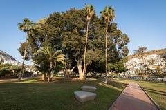 Πουέρτο Ρίκο, θλγραν θλθαναρηα στην Ισπανία - 14 Δεκεμβρίου 2017: Πάρκο με τα όμορφα δέντρα στο Πουέρτο Ρίκο σε θλγραν θλθαναρηα, Στοκ Εικόνα