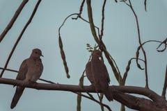 Πουλί αγάπης στοκ φωτογραφία με δικαίωμα ελεύθερης χρήσης