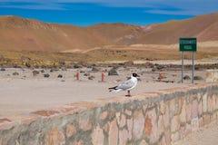 Πουλί ακριβώς που κάθεται εκεί στην έρημο στοκ φωτογραφίες με δικαίωμα ελεύθερης χρήσης