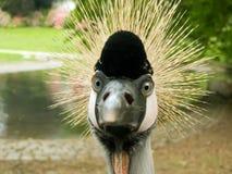 πουλί αστείο Στοκ εικόνα με δικαίωμα ελεύθερης χρήσης