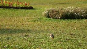 Πουλί γερανών που περπατά σε ένα λιβάδι απόθεμα βίντεο