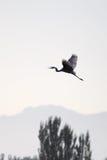 πουλί ελεύθερο Στοκ εικόνες με δικαίωμα ελεύθερης χρήσης