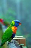 πουλί ζωηρόχρωμο Στοκ φωτογραφία με δικαίωμα ελεύθερης χρήσης