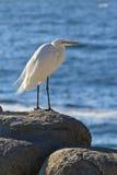 Πουλί θάλασσας Στοκ Φωτογραφία