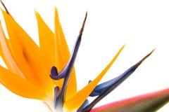 πουλί ΙΙΙ παράδεισος Στοκ φωτογραφία με δικαίωμα ελεύθερης χρήσης