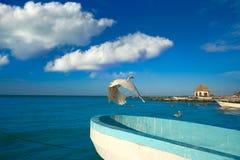 Πουλί και βάρκα ερωδιών νησιών Holbox σε μια παραλία Στοκ εικόνα με δικαίωμα ελεύθερης χρήσης