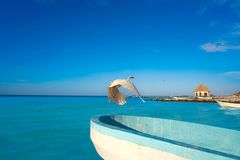 Πουλί και βάρκα ερωδιών νησιών Holbox σε μια παραλία Στοκ Εικόνες